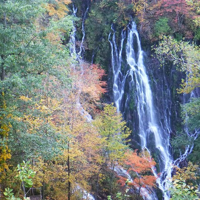 #五色ヶ原 #布引滝 の #紅葉 は、今が、#旬 です。