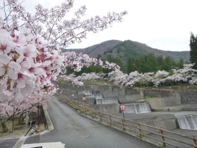 栃尾,桜まつり