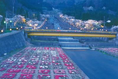 栃尾,桜,ライトアップ