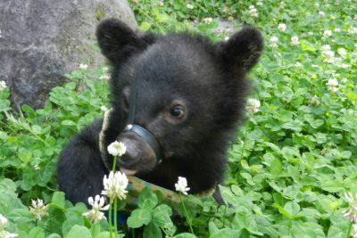 子熊,クマ牧場,奥飛騨,日帰り入浴,貸切